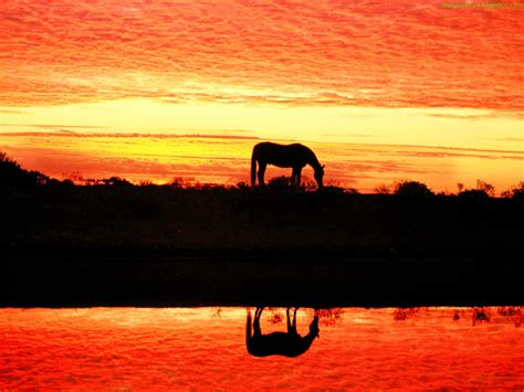 Horse Wallpapers 4