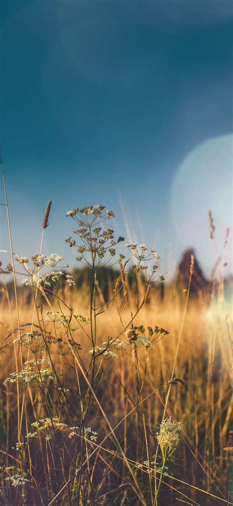 mx04-fall-field-nature-flower-reed-sunny-flare-wallpaper