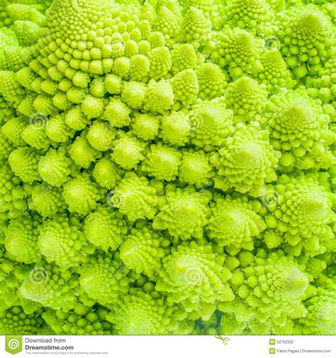Broccoli Close Up Texture Fractal Background Stock Photo